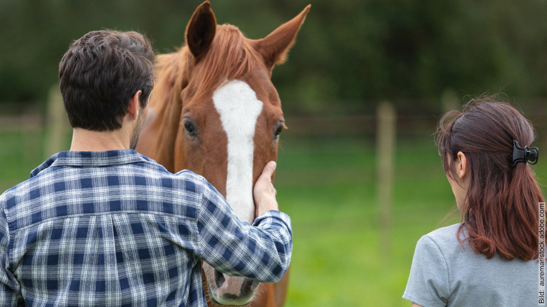Pferdegestützte Paartherapie. Paar begrüßt ein Therapiepferd auf der Weide.